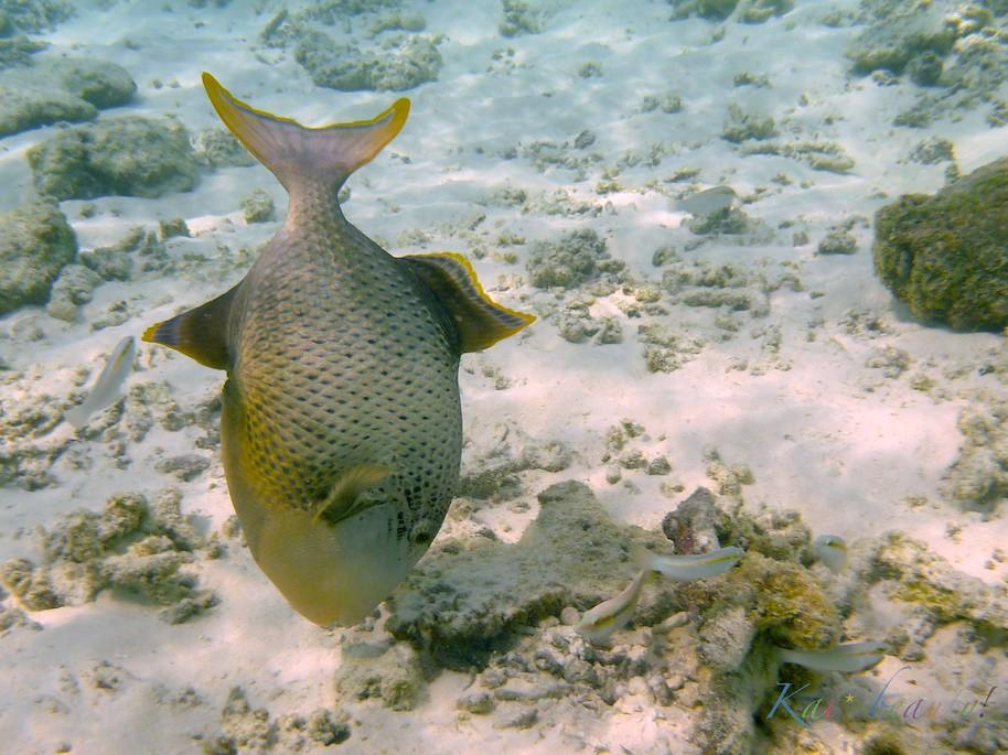 Maldives 071