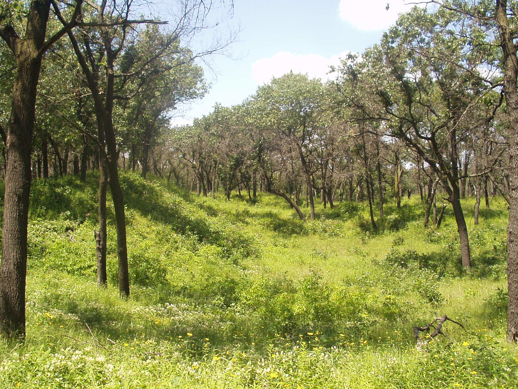 Miller Woods - Summer - 5