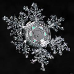 Snowflake: Carousel Colours