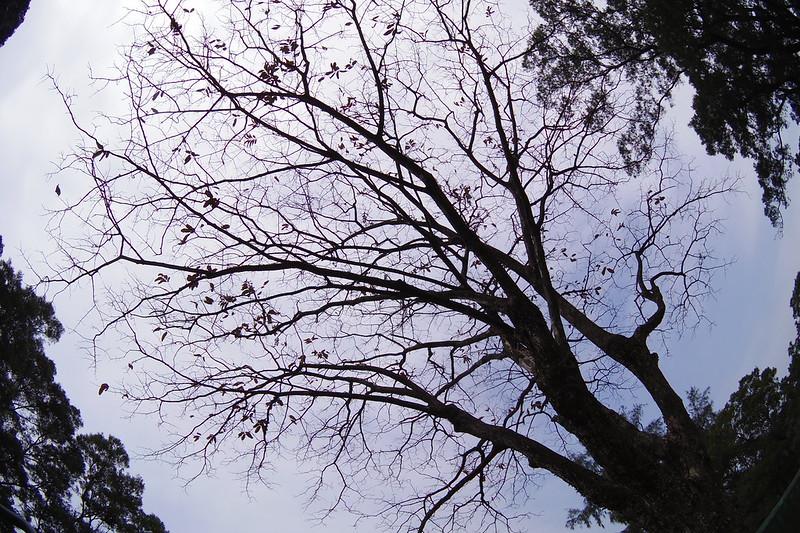另類紅葉 by pentax q7