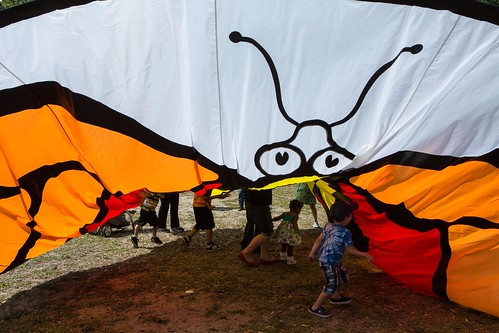 The Giant Butterfly Flag