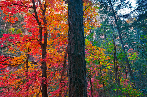 Fall Color in the Canyon by David Shield Photography