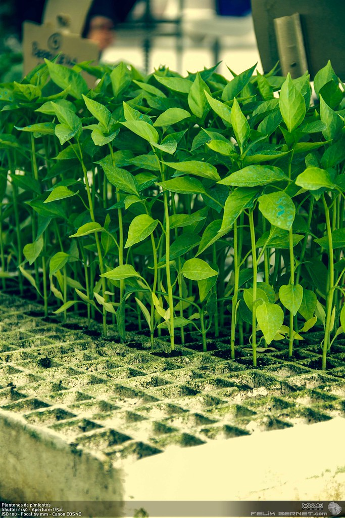 El invernadero de martina huerto ecologico 4 - Tierra para semilleros ...
