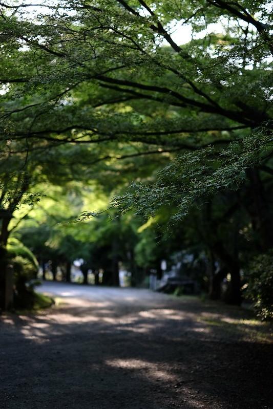 三井寺の緑