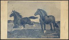 Lou Burk, Breeder's Gazette , Spruce 2200, Tom 2nd (6495) 2208 (front)