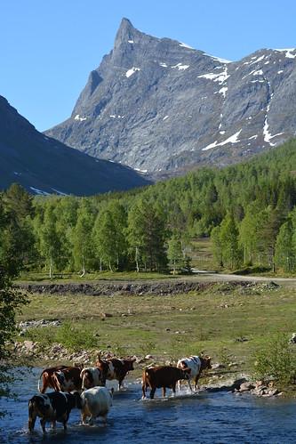 mountains norway norge fjell nordfjord hornindal sognogfjordane sunnmørsalpene sunnmørsalpane hornindalsrokken ystenes martinystenes