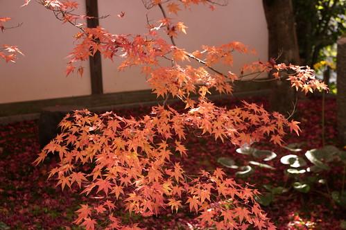 【写真】紅葉 : 金福寺