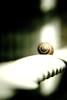 spiral snail by paulaberlin