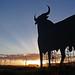Osborne bull at Conil de la Frontera / Osborne Stier bei Conil de la Frontera by uwe20
