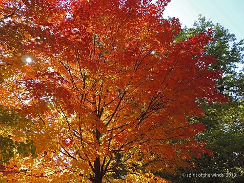 autumn fall spokane otw excapture