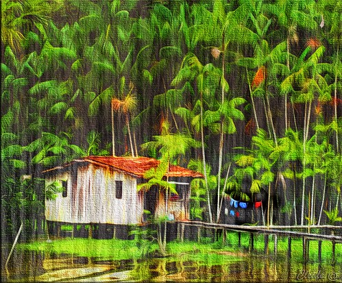 brazil art digital forest photography photo textures shining paintingeffect stilthouse palafita 2013 artdigital cs5 awardtree exoticimage ♣cleide♣ netartii brushesandpixels