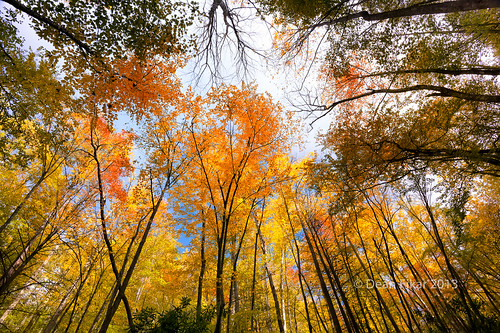park wood blue autumn light sky orange sunlight plant color tree fall nature beauty yellow forest season landscape gold golden leaf nationalpark high october colorful day branch pattern natural bright outdoor tennessee seasonal perspective foliage growth trunk canopy smokies tranquil upward greatsmokymountainsnationalpark