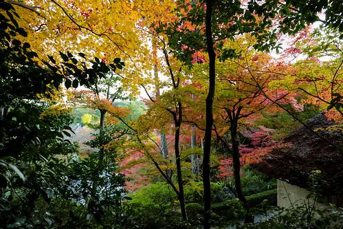 鈴虫寺 Suzumushi-temple