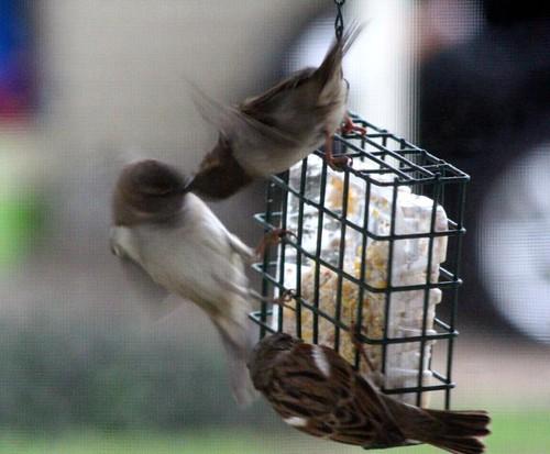 birdssuet2-5