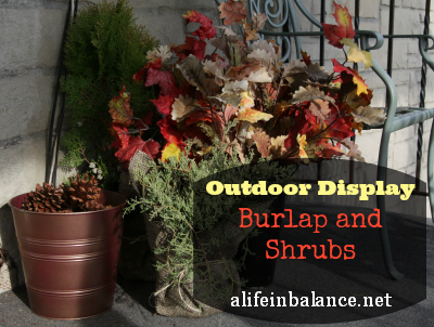 Outdoor Display for Fall Using Burlap and Evergreens/Shrubs