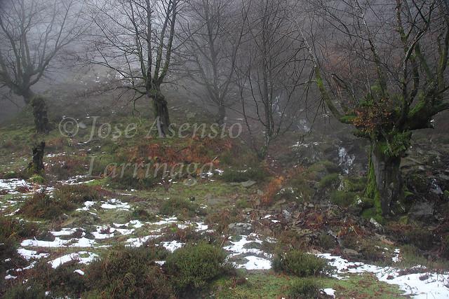 Parque Natural de Gorbeia/Gorbea #DePaseoConLarri #Photography 2141