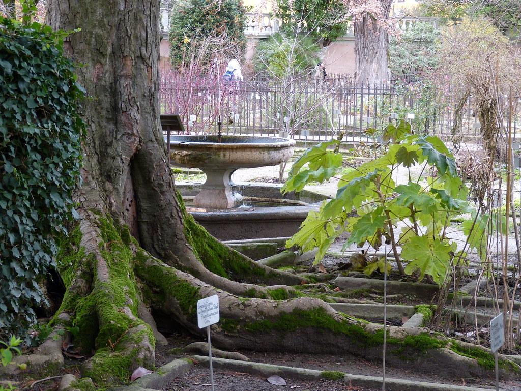 Giardino botanico, Padova