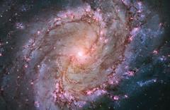 Hubble Views Stellar Genesis in the Southern Pinwheel
