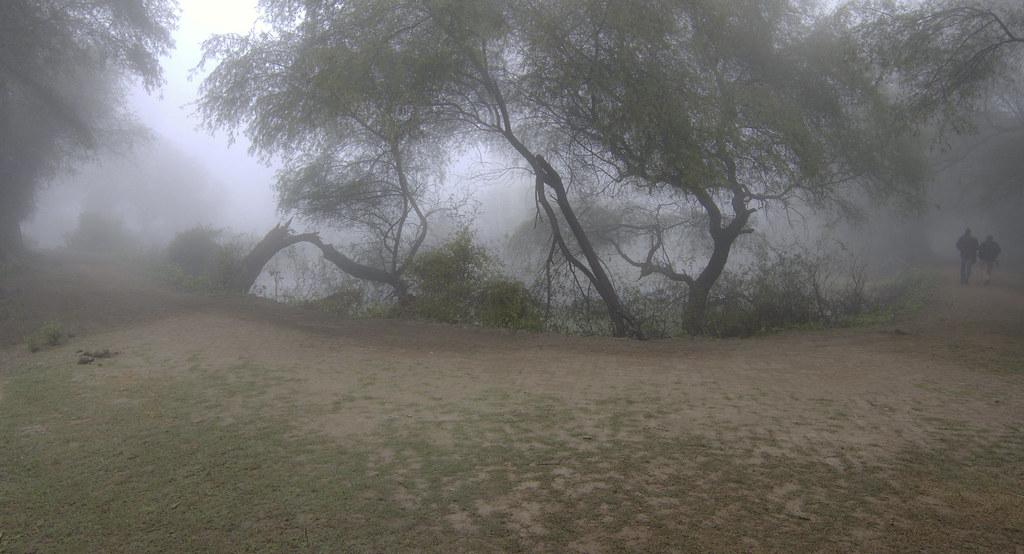 fogpanorama_cropped
