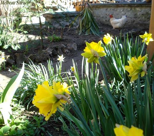 Au jardin des fleurs & des bêtes