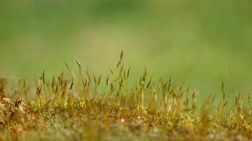 plant rock raynox