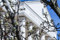 Spring blooms come to Liberty on March 31, 2014.