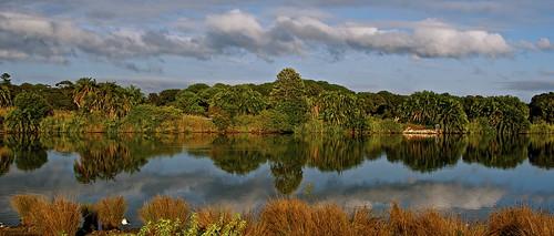 trees reflection sunrise sydney australia
