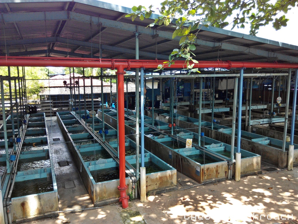 Qianhu fish farm somewhere to bring your kids this june for Koi fish farm near me