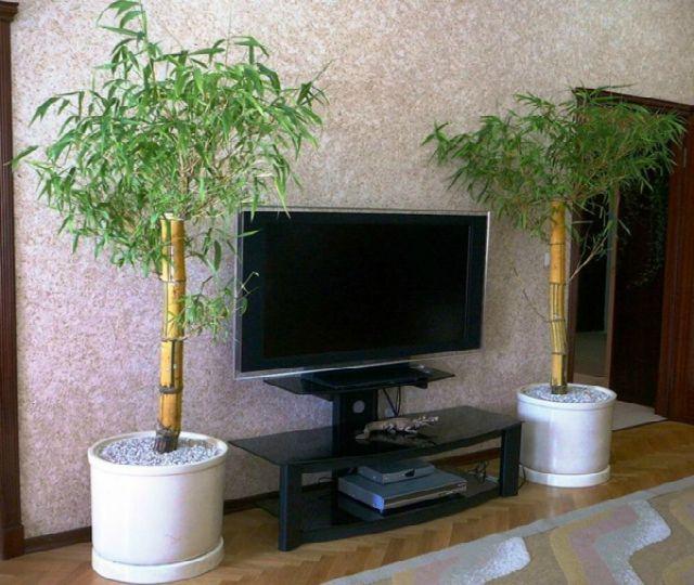1planta bambu diarioecologia.jpg