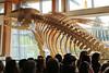 Whale exhibit unveiled