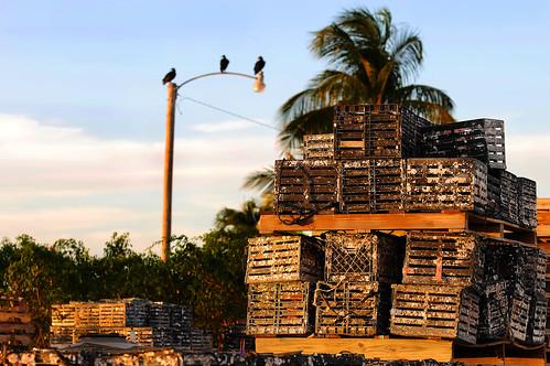sunset palmtree stonecrabtraps crabtraps fishingvillage goodlandfl southwestflorida florida usa lamppost blackvultures