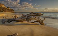 Ffreyes Beach