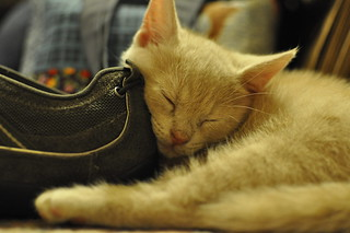 Q is a boy who loves shoes