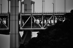 徳島県 Tokushima