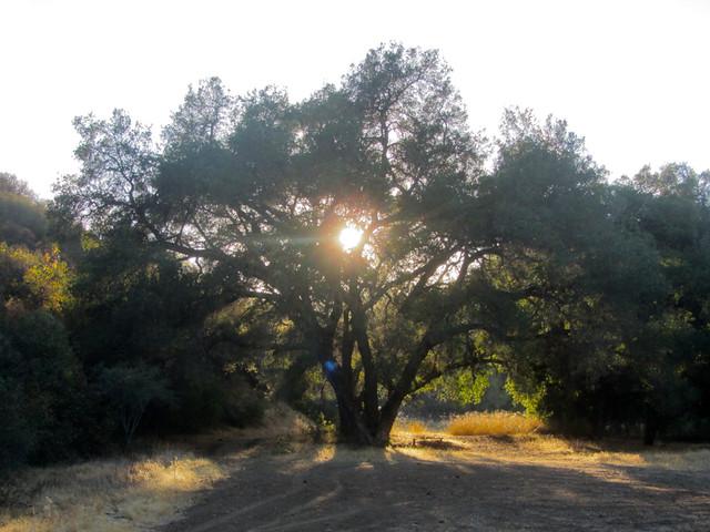 oak light at dusk