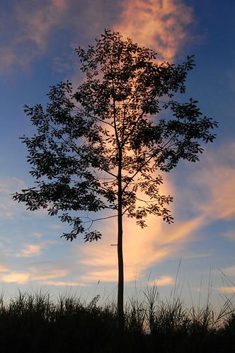 shadow orange tree sunrise