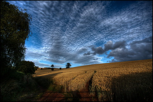 beautiful clouds landscape golden countryside cloudy wheat farming harvest canonef1740mmf4lusm devoncountryside canon5dmk11 mygearandme mygearandmepremium mygearandmebronze mygearandmesilver mygearandmegold mygearandmeplatinum mygearandmediamond photographyforrecreationeliteclub flickrsfinestimages1 flickrsfinestimages2 flickrsfinestimages3 celebritiesofphotographyforrecreation photographyforrecreationclassic manfrotto441carbonone