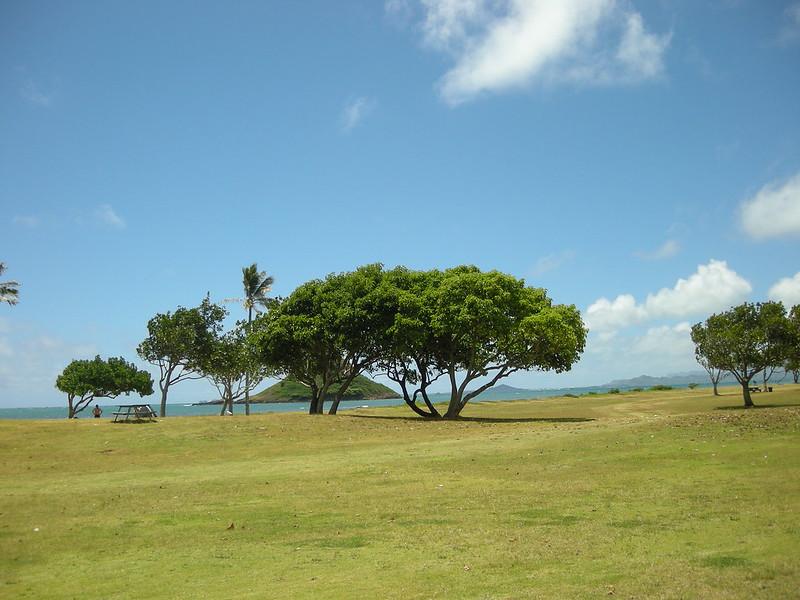 ハワイ hawaii-0018