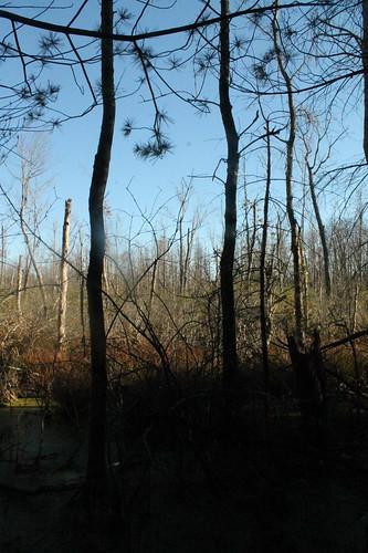 andyarthur edgeoftheswamp bearswamppreserve