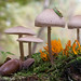 Mushrooms village by fischerfotografie.nl