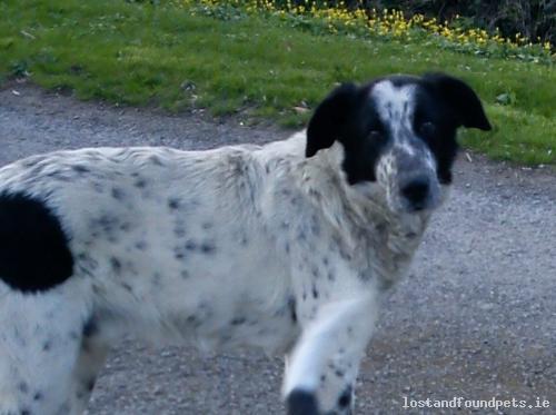 [Reunited] Mon, Oct 21st, 2013 Lost Male Dog - Cappamurragh, Dundrum, Cashel. Ballagh, Ardmayle, Goolds Cross, Tipperary