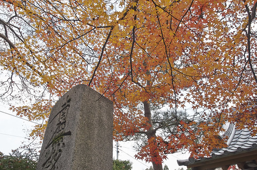 【写真】2013 紅葉 : 光悦寺/2013-12-02/IMGP4447