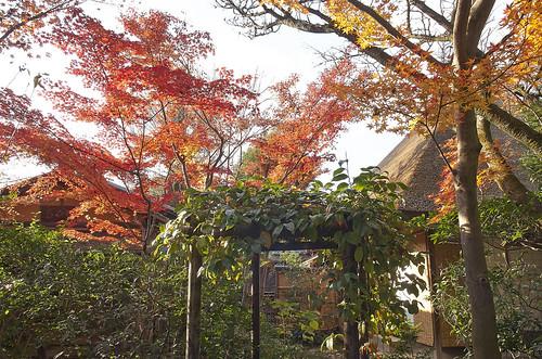 【写真】2013 紅葉 : 西行堂/2020-09-05/IMGP4742
