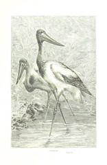 """British Library digitised image from page 89 of """"Wanderings in South America ... With an introduction by Norman Moore"""""""