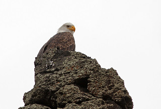 This eagle rocks