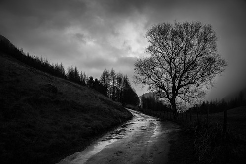 Black Steel (Winter Tree Silhouette), Lake District by flatworldsedge