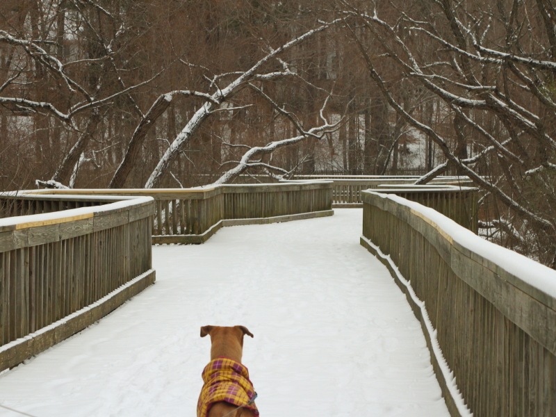 snow_day006