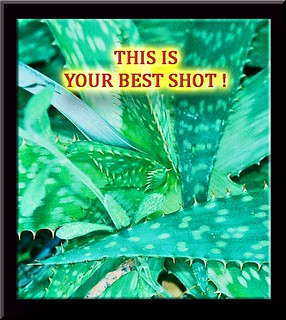 Your Best Shot