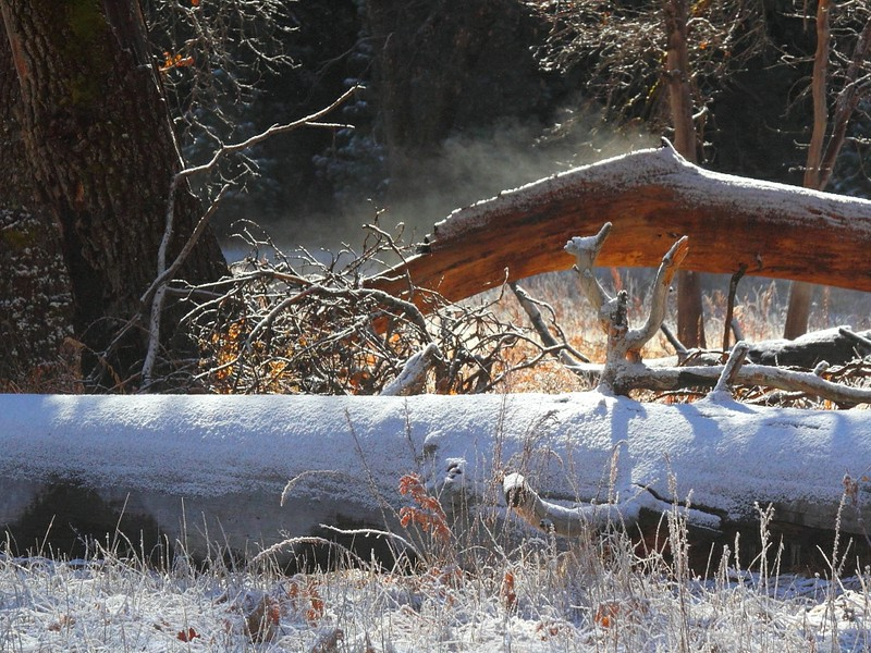 IMG_6549 Fallen Tree at El Capitan Meadow, Yosemite National Park
