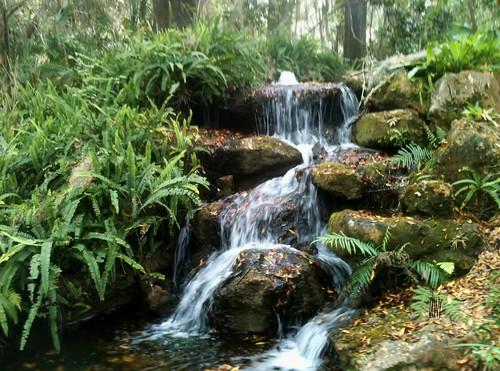 statepark nature waterfall rocks florida ferns 2014 stateparks rainbowsprings